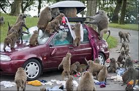 Monkey's Stealing